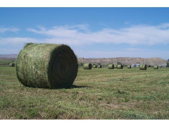 Lucerne hay