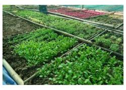 Seedlings for sale