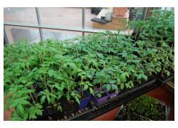 Seedlings for sale