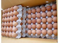 Fresh Table Egg for Sale