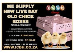 Chick Transport Boxes for Sale