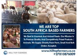 Boer Goats & Kalahari Reds