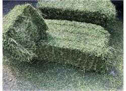 Grade A Lucerne / Alfalfa Hay
