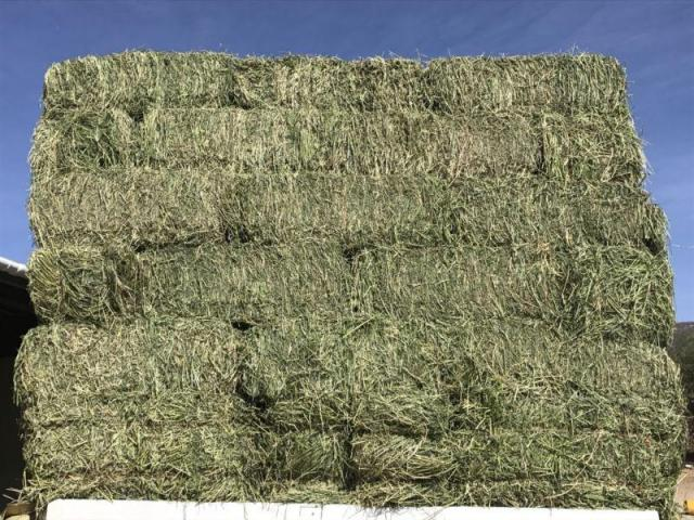 Grade A Lucerne Bales for sale