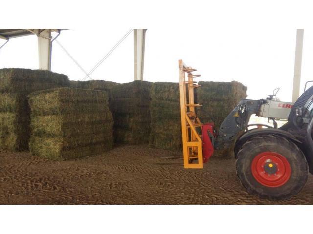 Best Price Lucerne/Alfalfa Hay
