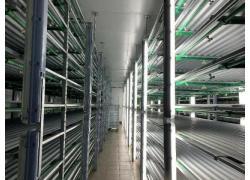 Sheep feed fodder unit