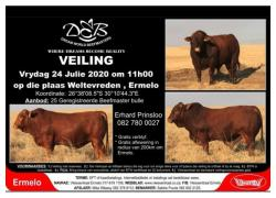 DREAM WORLD BEEFMASTER AUCTION