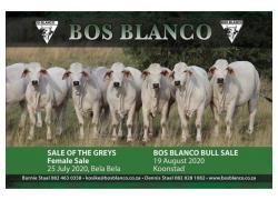 BOS BLANCO SALE