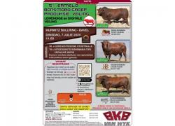 ERMELO BONSMARA GROUP AUCTION