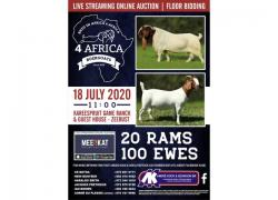 4 AFRICA BOERGOATS AUCTION