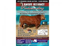 ANGUS ALLIANCE AUCTION