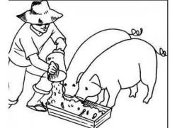 Healthy Pigs Feed