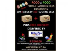 Hatching Eggs Promotion