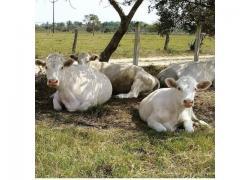 good Variety of Livestock