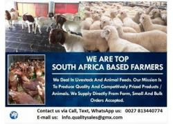 Goats and Sheep Sales