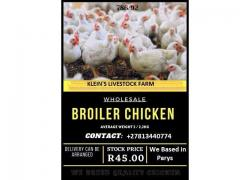 Large Broiler Chickens Sales