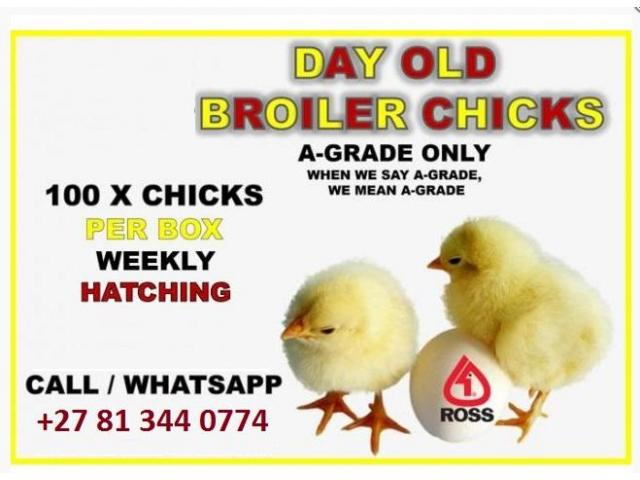 Day Old Chick Sales