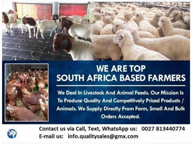 SHEEPS & GOATS SALES