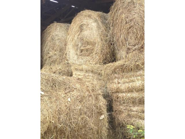 Bails for Sale