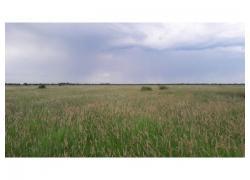 Grasbale / Grass Bales