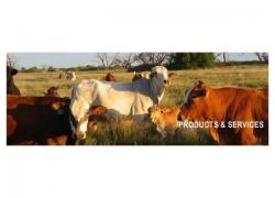 Feedtek Animal Feed Solutions