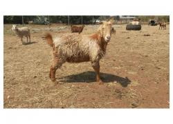 ZWJ Livestock