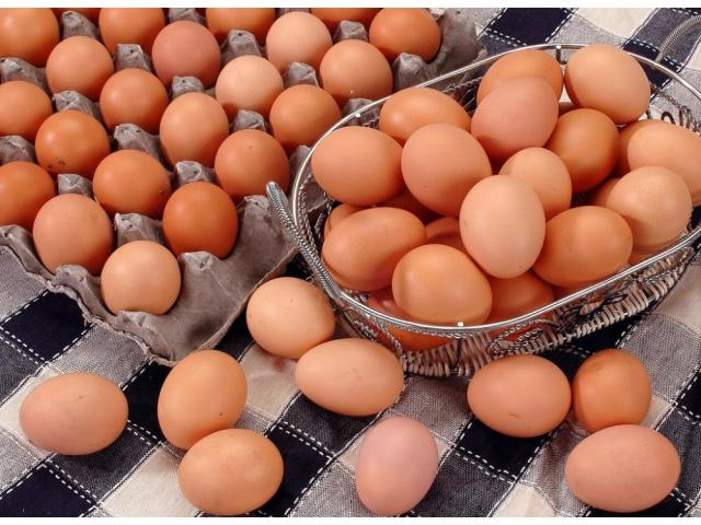 chicken egg white and brown