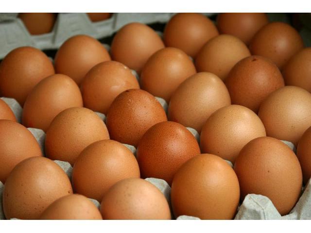 brown egg or white egg