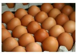 brown egg or white egg