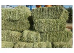 Lucern at a special price.,