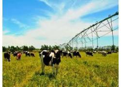 senter 360 Irrigation