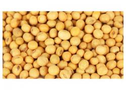 Quality Soya beans for sale