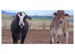 Sano Livestock Feed