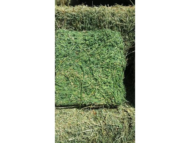 LUCERNE/ALFALFA HAY FOR SALE