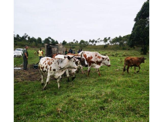 Sprayrace for all livestock