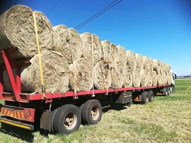 Gras bale - grass bales