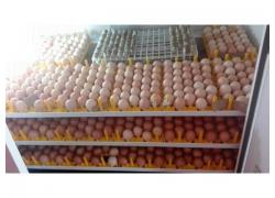 Hatchery for sale